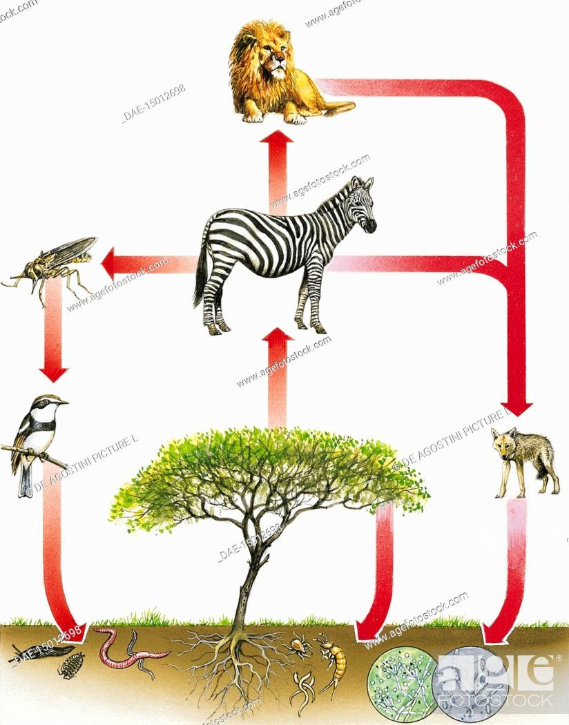 Ecosystem Diagram Drawing Stock Photo Picture And Rights Managed