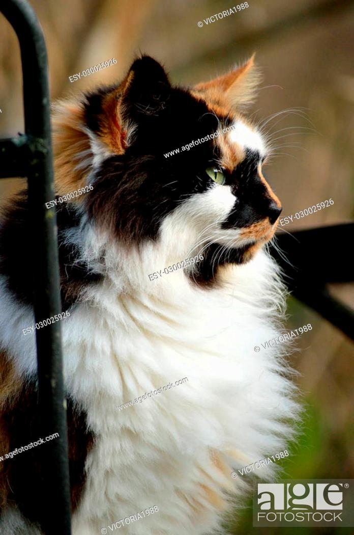 Stock Photo: Female calico cat in old over-grown garden, sitting on wrought iron outdoor furniture.