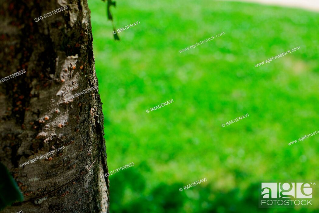 Stock Photo: Tree trunk and Lawn.