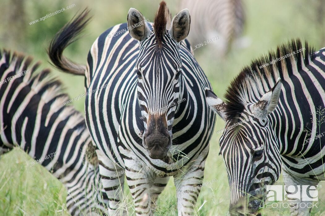Stock Photo: SOUTH AFRICA- Kruger National Park.