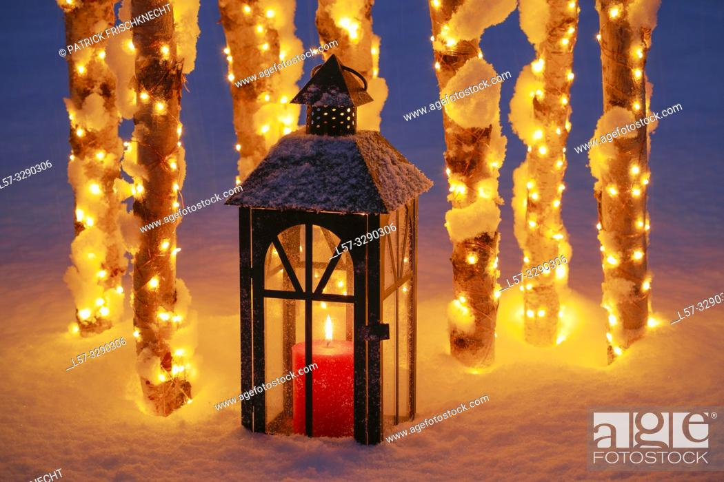 Photo de stock: lantern among birch tree trunks with christmas lights.