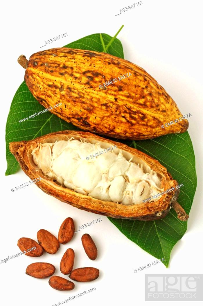 Stock Photo: Cocoa fruit still life (Theobroma cacao).