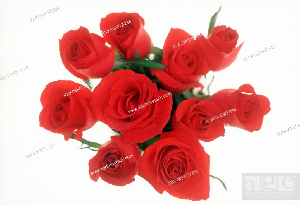 Stock Photo: Close-up of a bunch of roses.