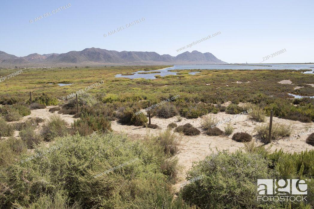 Stock Photo: Salt lagoon in Cabo de Gata nature reserve, Almeria, Spain.