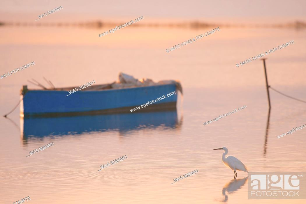 Stock Photo: Great Egret at sunset in Deltebre, Catalonia.