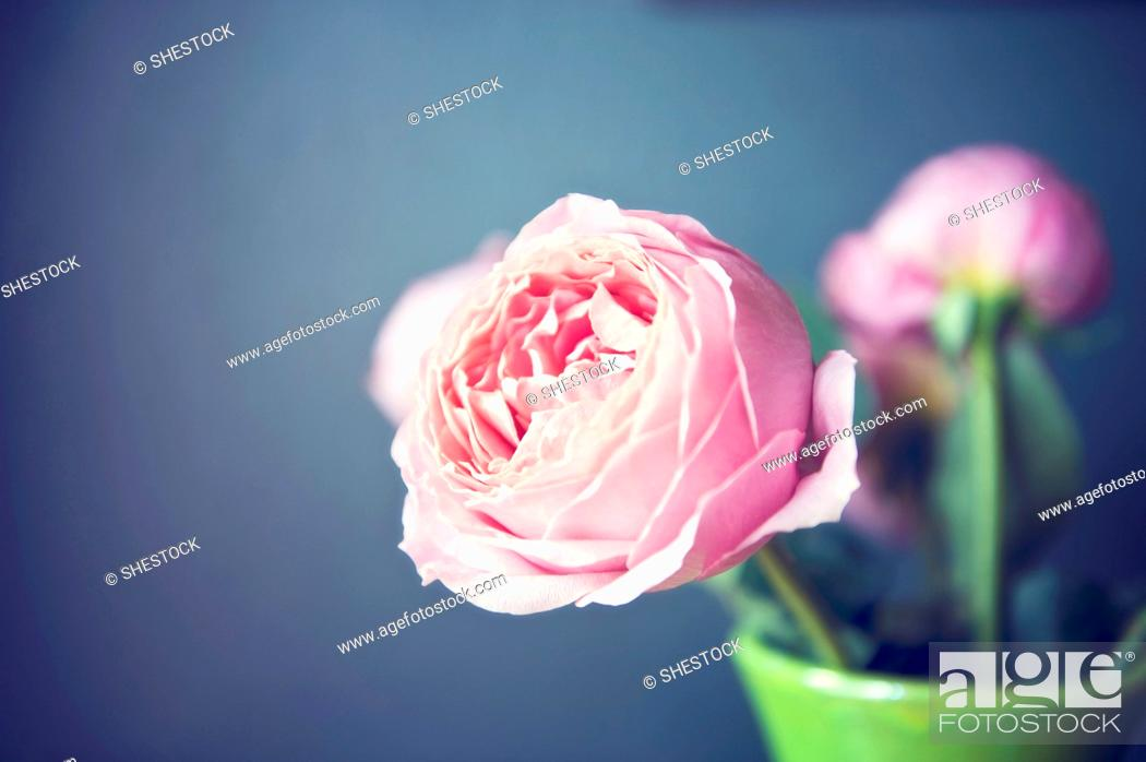 Imagen: Close up of flowers in vase.