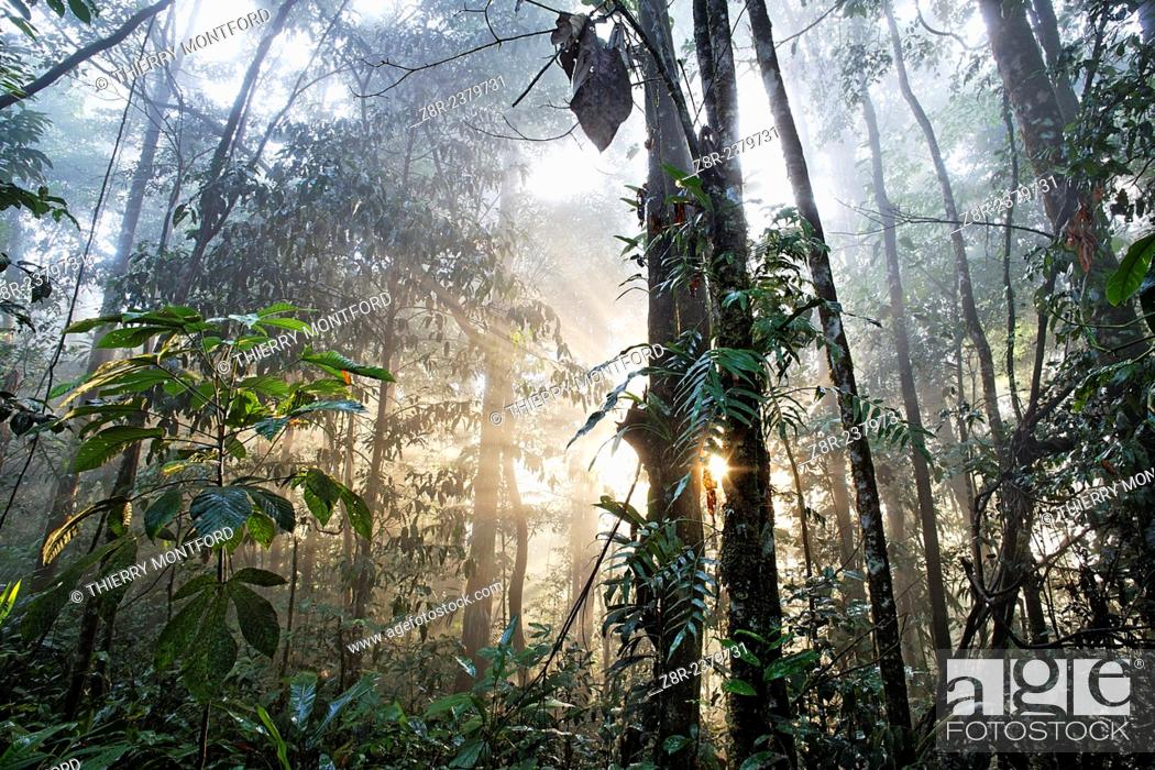 Stock Photo: Forest of the Kaw mountain. French Guiana.