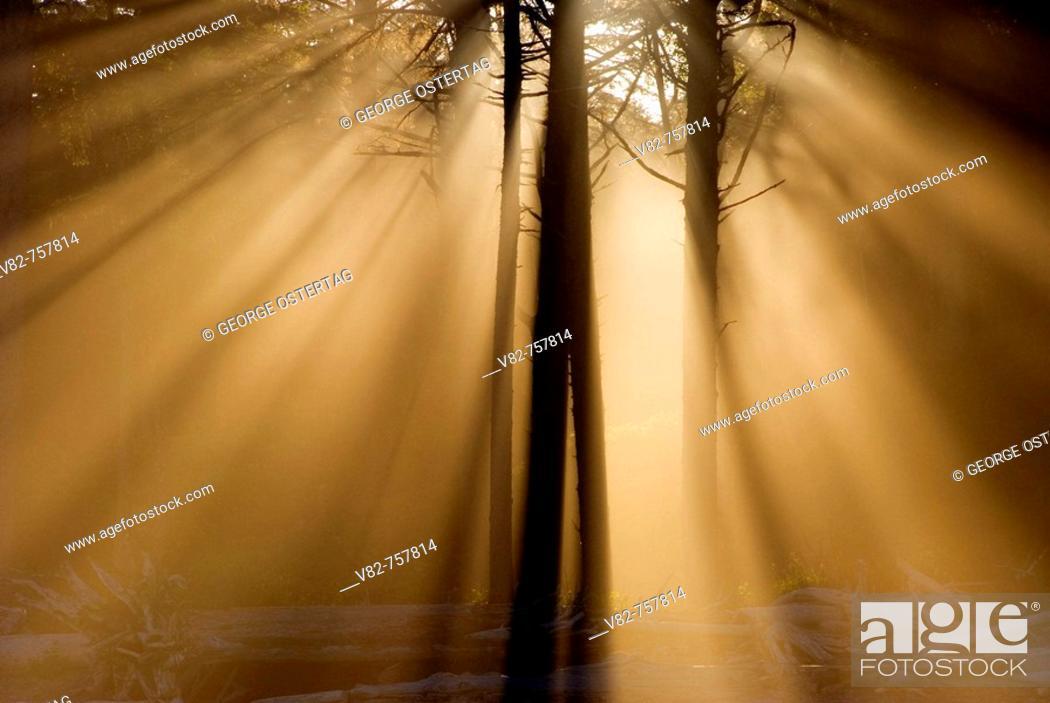 Stock Photo: Coastal fog with sun rays at Ruby Beach, Olympic National Park, Washington, USA.