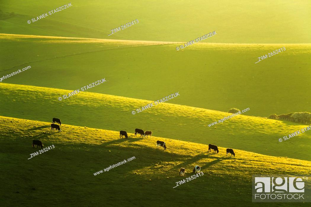Imagen: Spring evening on the South Downs near Brighton, East Sussex, England.