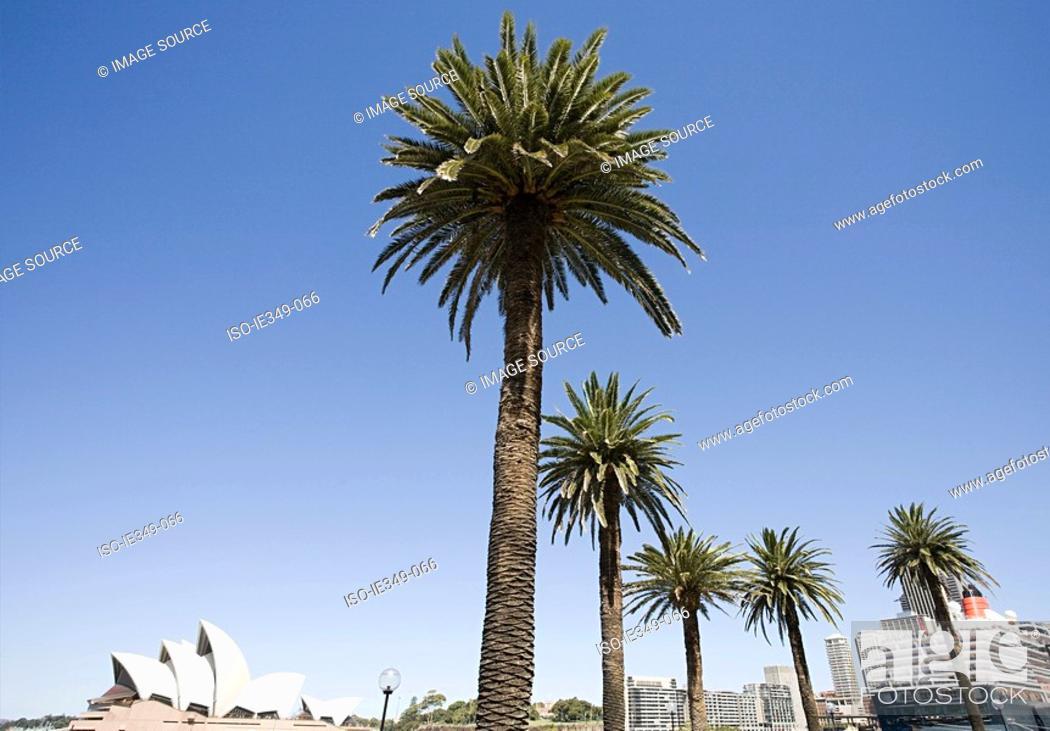 Stock Photo: Palm trees and sydney opera house.