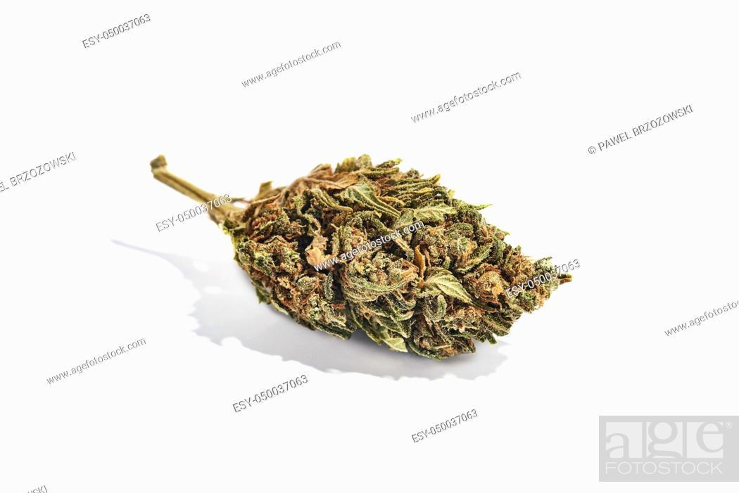 Imagen: Dry marijuana bud isolated on white background. Studio image, close up.