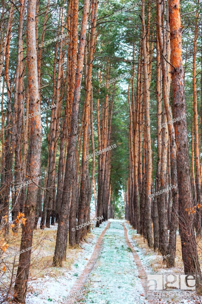 Stock Photo: Scenic snow-covered forest in winter season. Good for Christmas background.