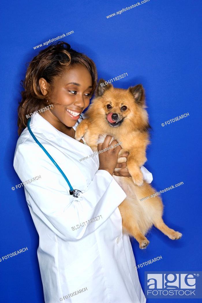 Stock Photo: Female veterinarian holding Pomeranian.