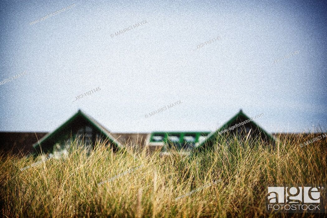 Stock Photo: Two house roof hidden behind plants, Great Britain.