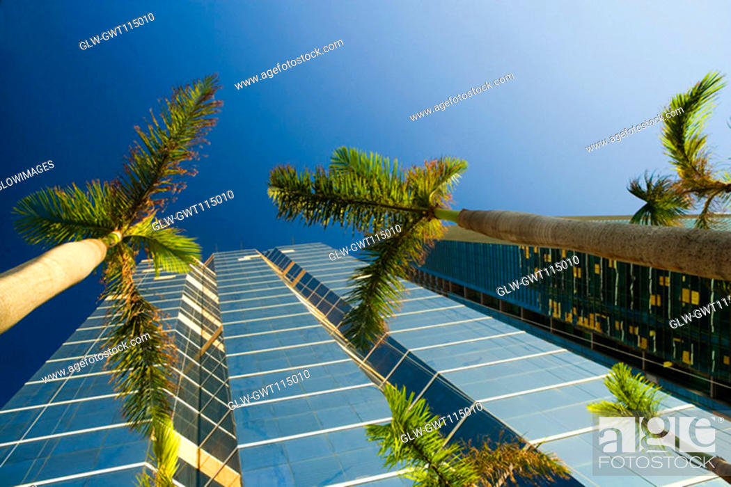 Stock Photo: Low angle view of palm trees in front of skyscrapers, Miami, Florida, USA.