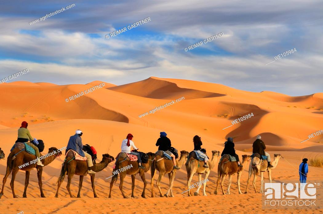 Stock Photo: Tuareg Berber man leading a group of tourists on camels through the Erg Chebbi desert in Morocco.