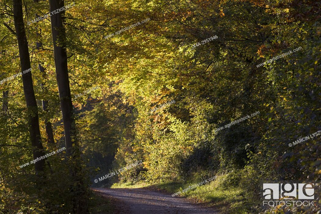 Stock Photo: The Forest Road in Autumn, Munich, Germany.