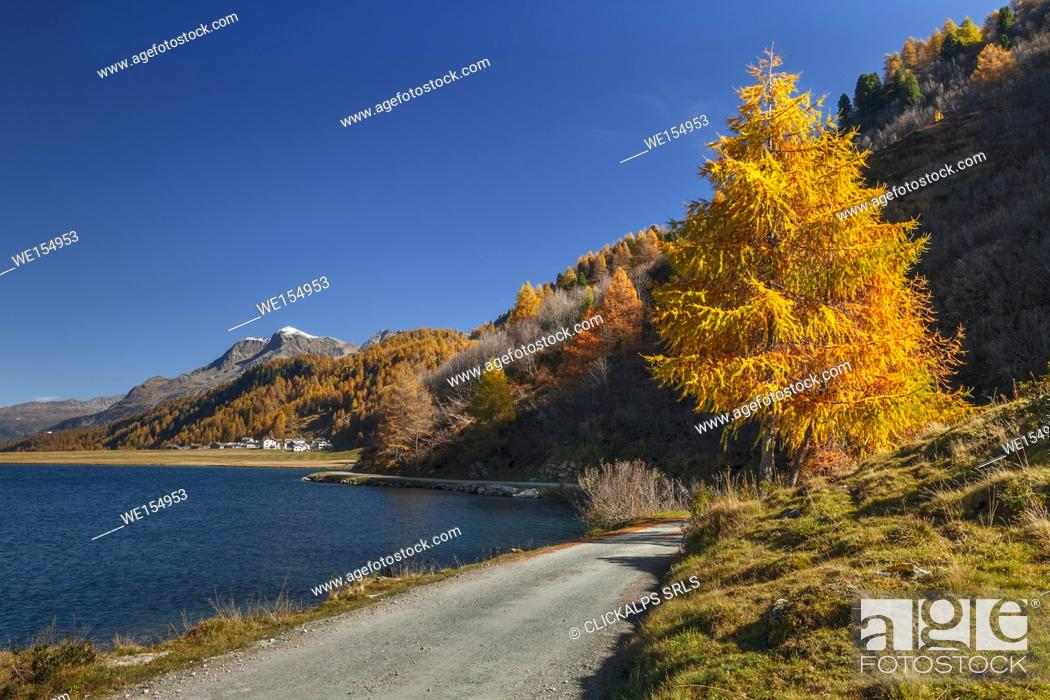 Stock Photo: Time to Autumn larch, Lake Sils, Engadine, Canton of Graubunden, Switzerland, Europe.