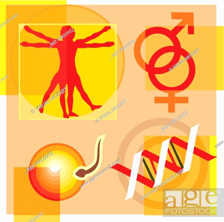 Stock Photo: Montage illustration about gene therapy and engineering containing a vitruvian man, male and female symbols, DNA, and sperm fertilizing an egg.