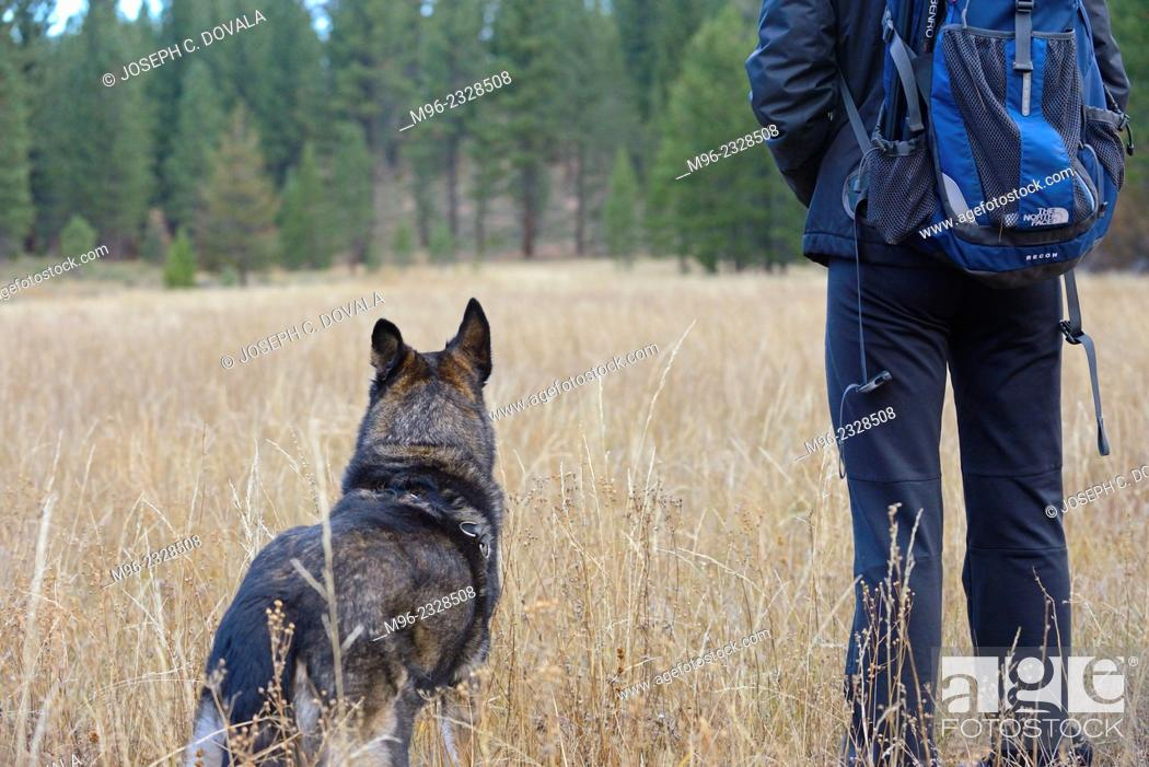 Stock Photo: Dog and person looking in field, Lake Tahoe, California, USA.
