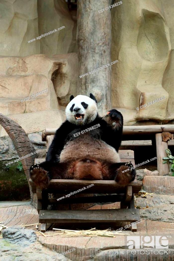 Stock Photo: panda bear eating carrot.