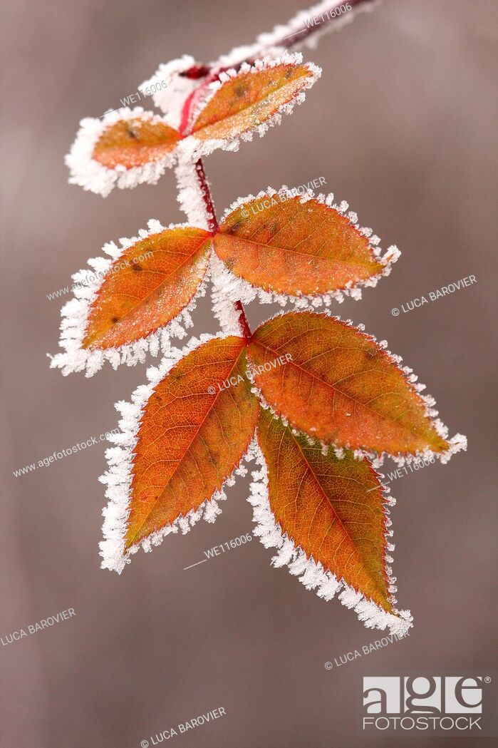 Stock Photo: A frosty winter.