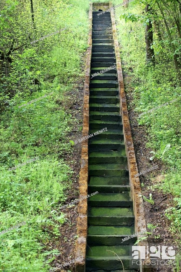 Stock Photo: Photography of steps covered with algae and moss,.