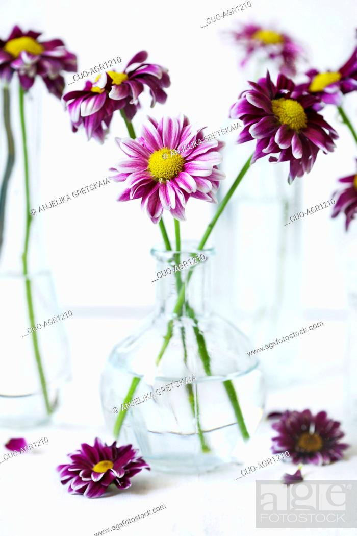 275 & Beautiful colorful flowers in vases Stock Photo Picture ...