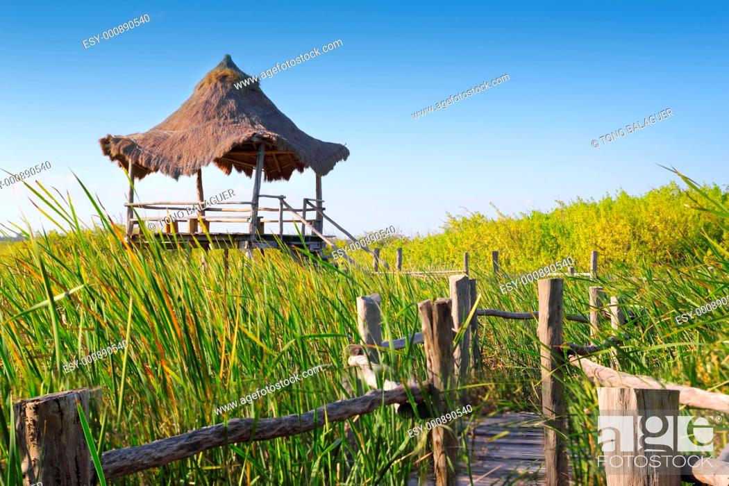 Stock Photo: hut palapa in mangrove reed wetlands in mexico.