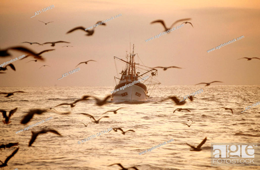 Stock Photo: Anchovy fishing, Ondarroa, Biscay, Spain.