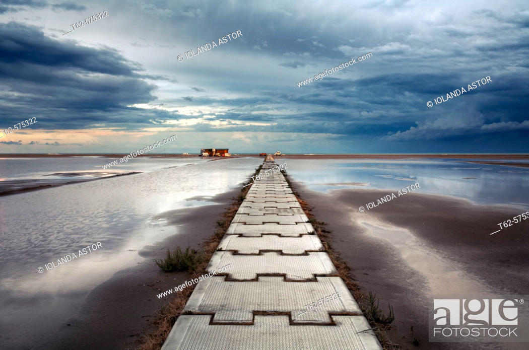Stock Photo: Eucaliptus beach. Delta del Ebro. Tarragona province. Catalonia, Spain.