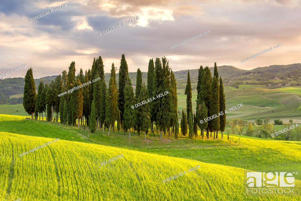 Stock Photo: Sunset on Cypress Grove Val d'Orcia Tuscany Italy World Location.