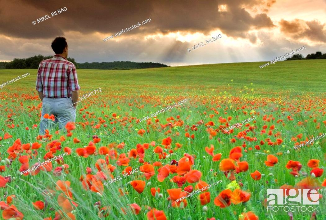 Stock Photo: Man watching storm clouds on a poppy field.
