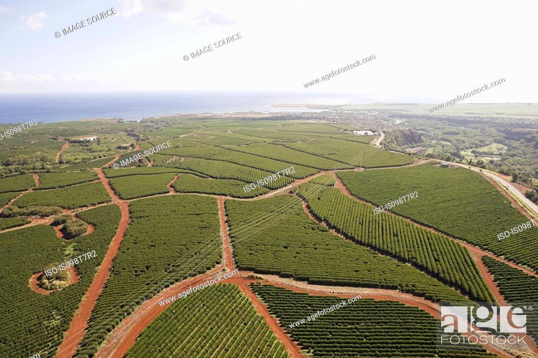 Coffee farm in kauai, hawaii, Stock Photo, Picture And