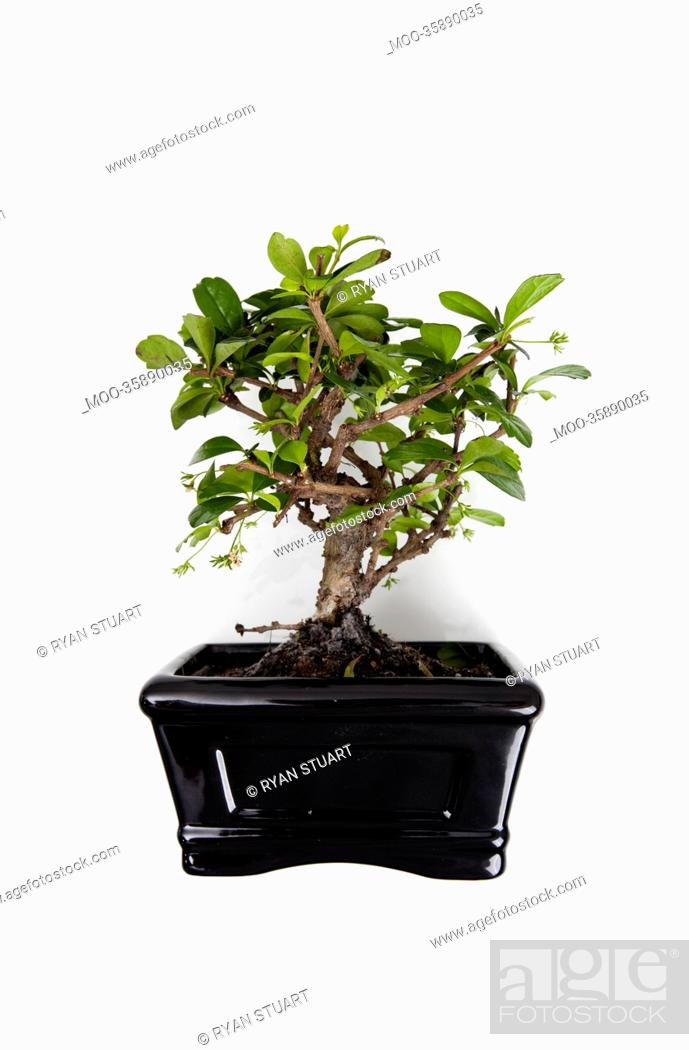 Stock Photo: Potted plant against white background.