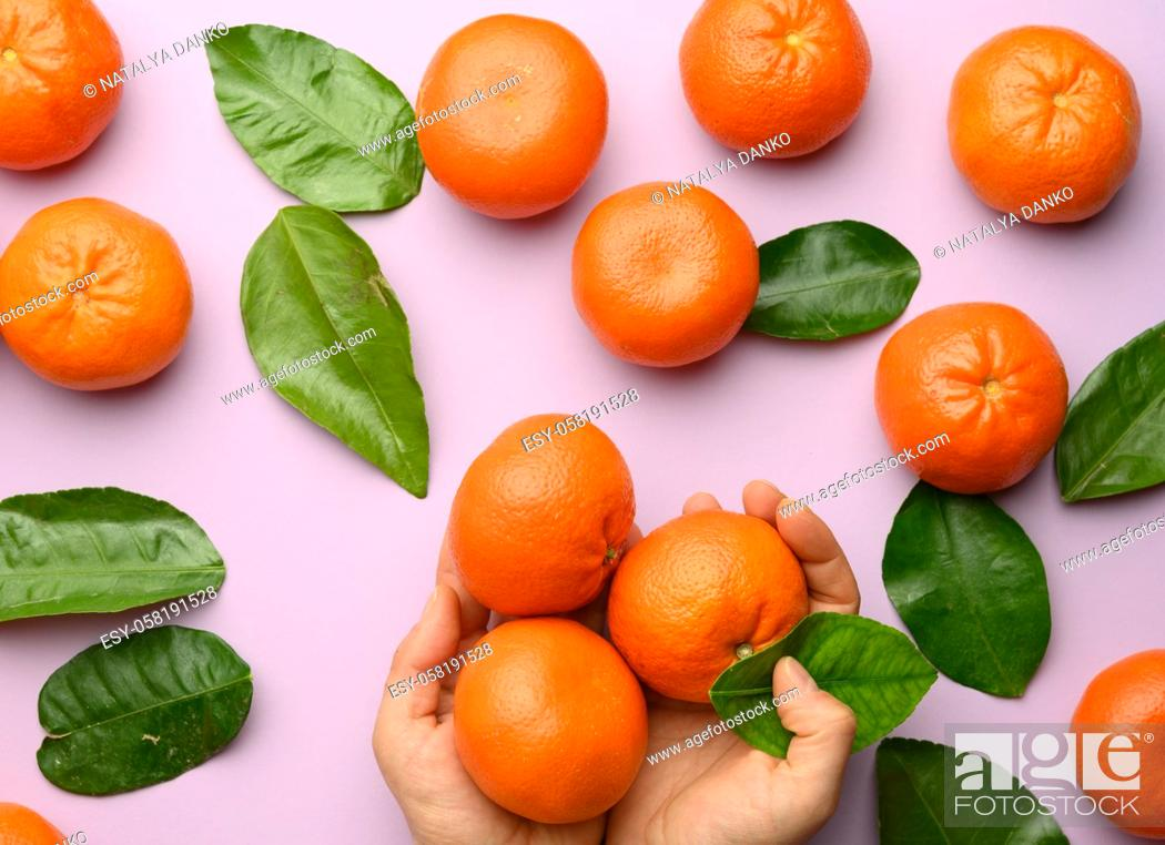 Stock Photo: female hands hold ripe tangerines and green leaves on purple background, top view.