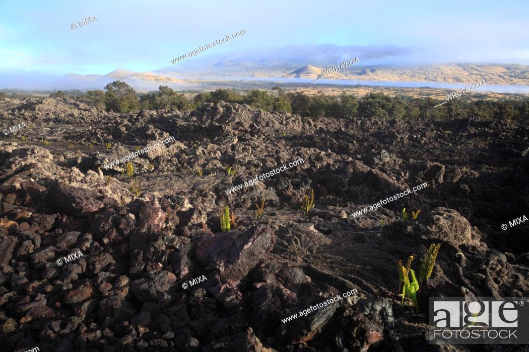 Stock Photo: Lava Flow, Hawaii, U.S.A.