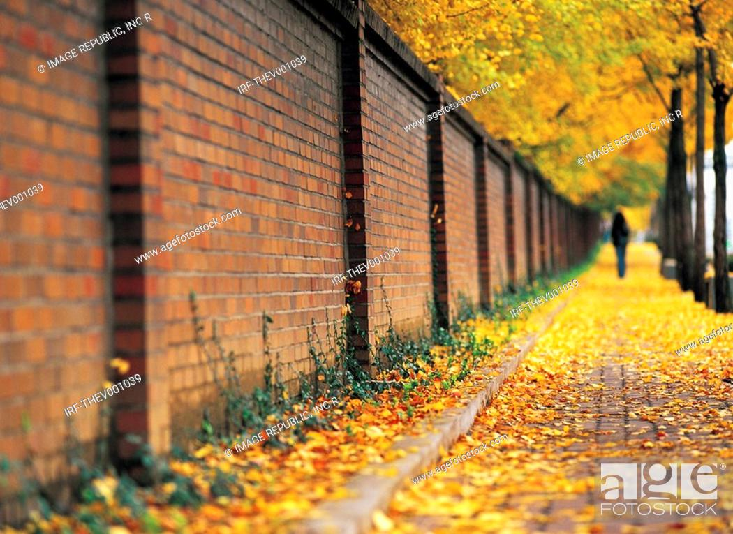 Stock Photo: stome wall by the sidewalk in autumn.