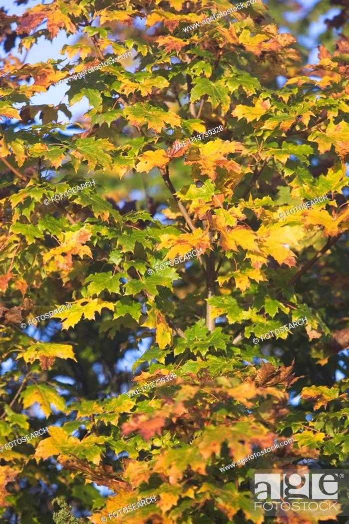 Stock Photo: Branch, Dense, Day, Close-Up, Autumn.