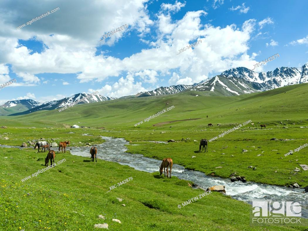 Stock Photo: Horses on summer pasture. The Suusamyr plain, a high valley in Tien Shan Mountains. Asia, central Asia, Kyrgyzstan.