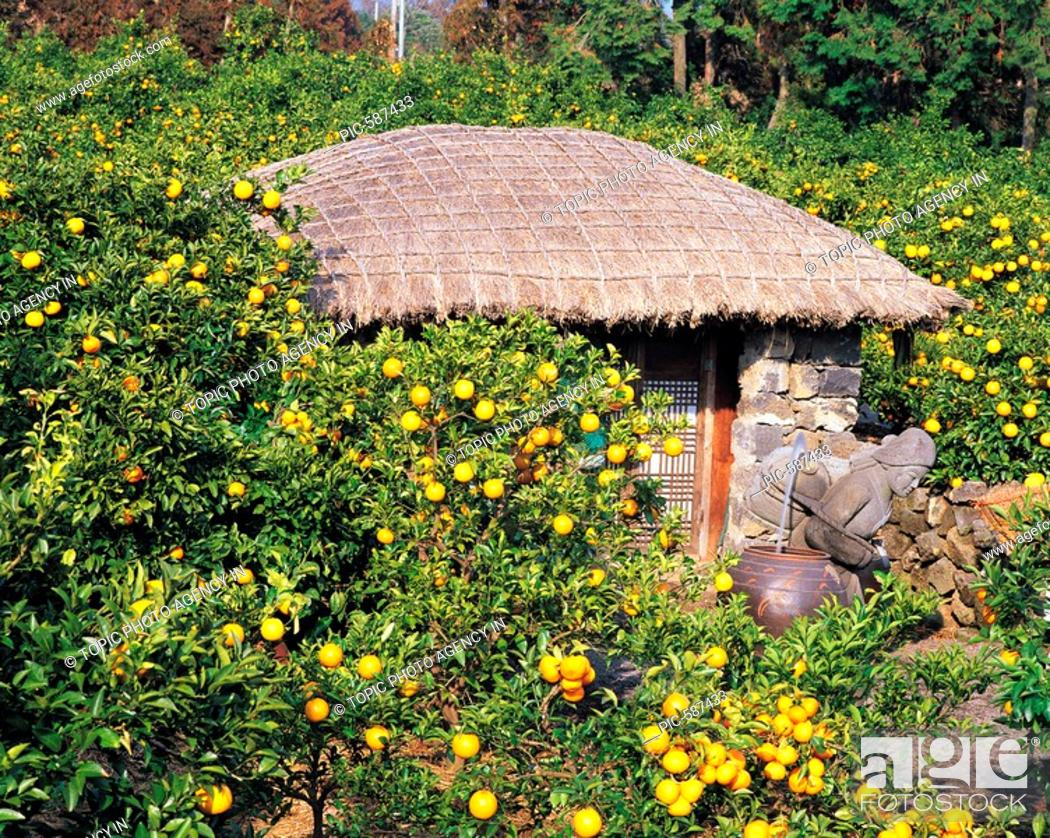 Stock Photo: Jeju Island,Korea.