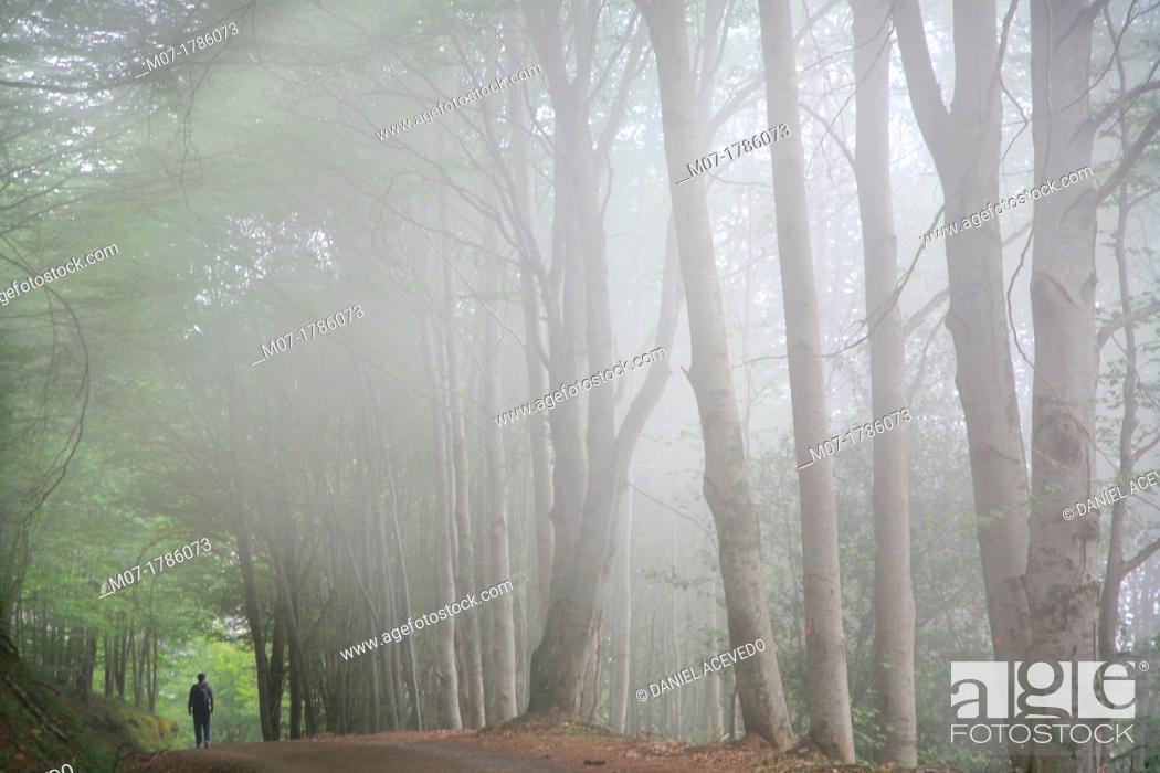 Imagen: Beech forest during summer season, Sistema Iberico mountain range, La Rioja wine region, Spain, Europe.