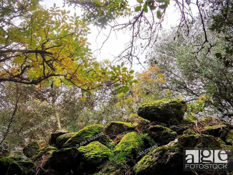 Stock Photo: Beautiful corner of the mountains, Robledillo de Trujillo, Extremadura, Caceres.