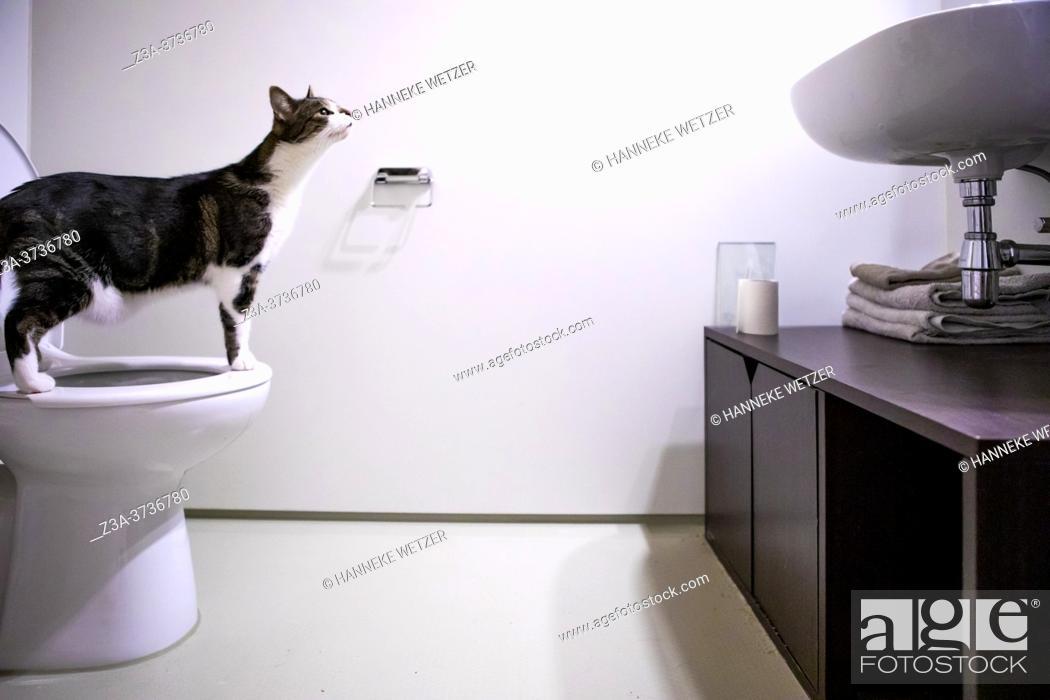 Imagen: Cat on a human toilet in a modern bathroom.