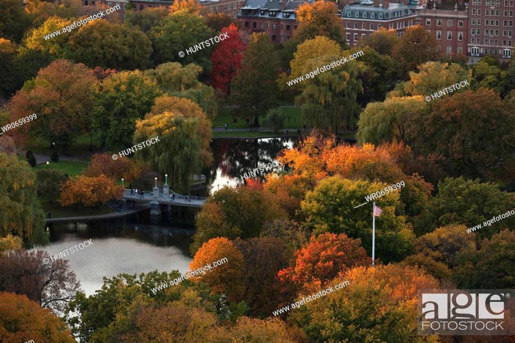 Stock Photo: Autumn trees in a park, Boston Public Garden, Boston, Suffolk County, Massachusetts, USA.