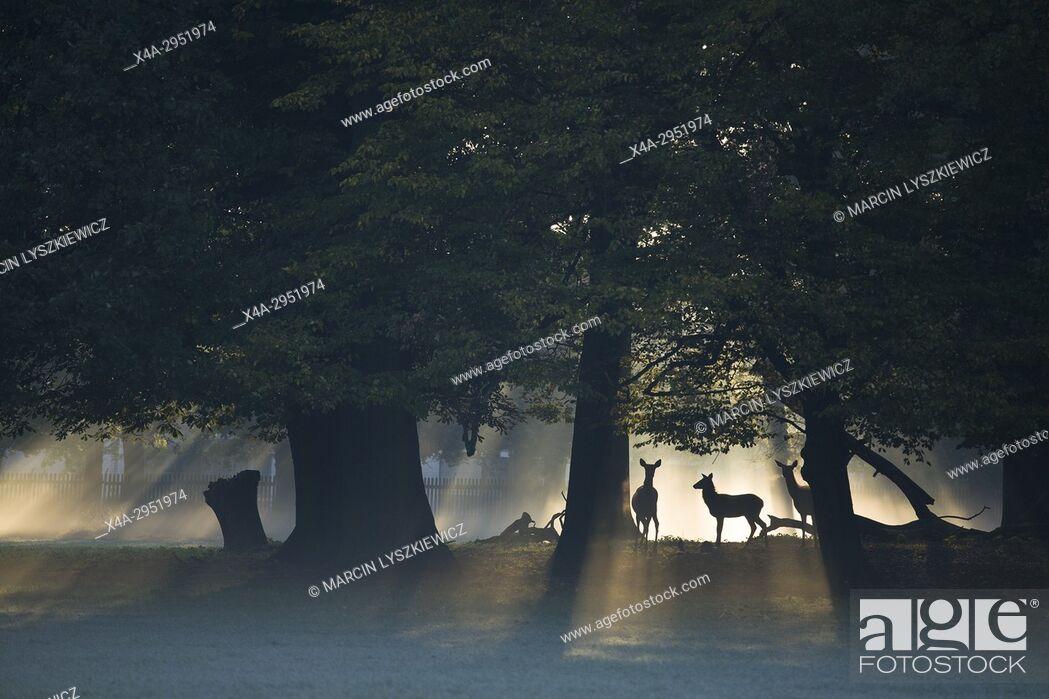 Stock Photo: Animal Park (Tiergarten) in Hanover, Lover Saxony, Germany.