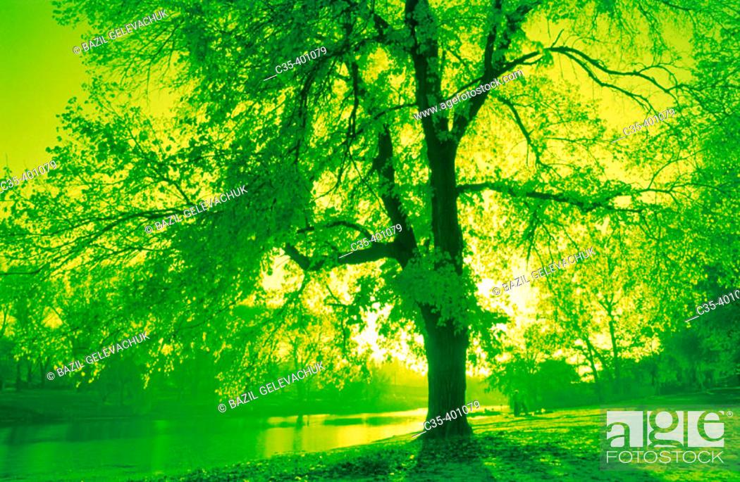 Stock Photo: Natural scene in autumn.