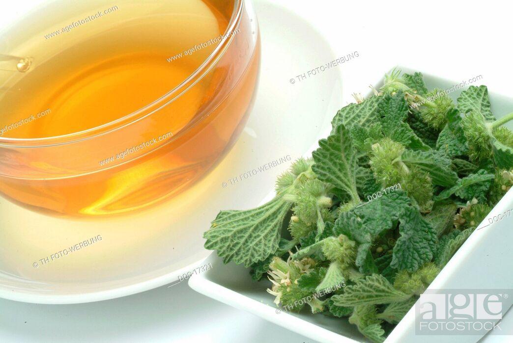 Imagen: tea mad of white horehound - medicinal plant - herb - Marrubium vulgare - Marrubio comune - te.