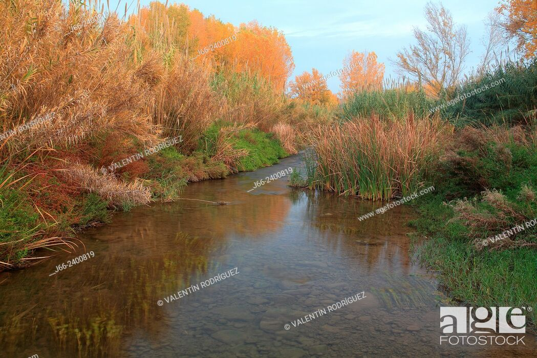 Stock Photo: vegetation on the bank of river Palancia in autumn, near of Soneja. Alto Palancia region in Castellón. Spain.
