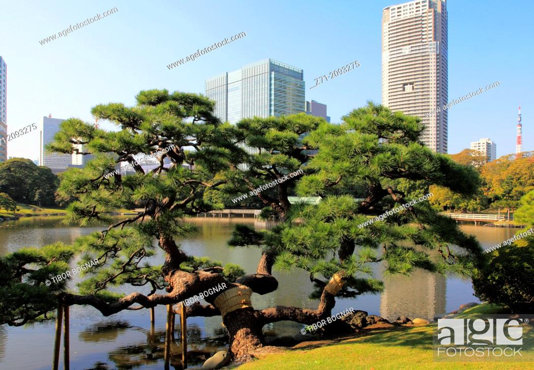 Japan, Tokyo, Hama-rikyu Gardens, Shiodome skyline,, Stock Photo ...